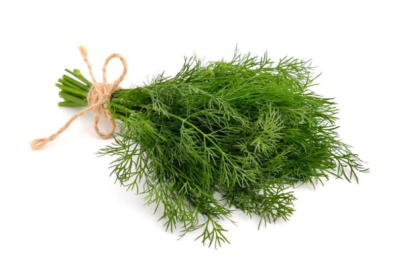 Ingredient of the week: Dill