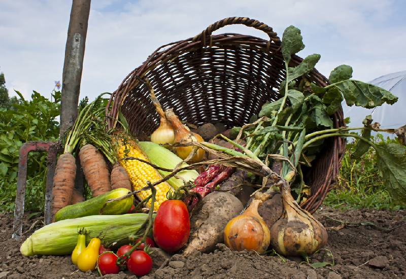 Fuel it: The pros and cons of organic food