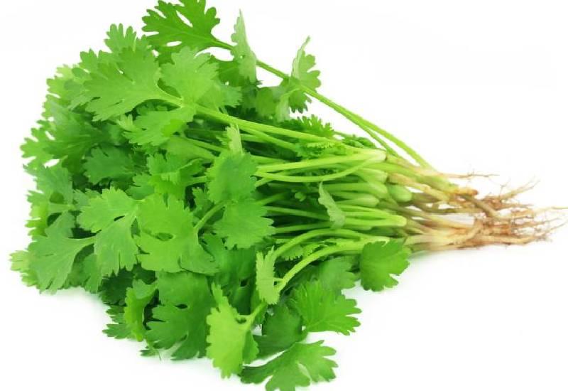 Ingredient of the week: Coriander leaves