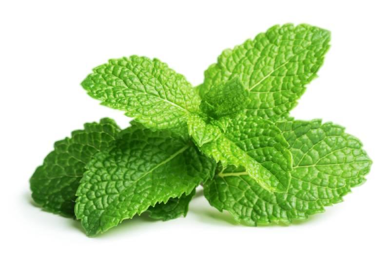 Ingredient of the week: Mint leaves