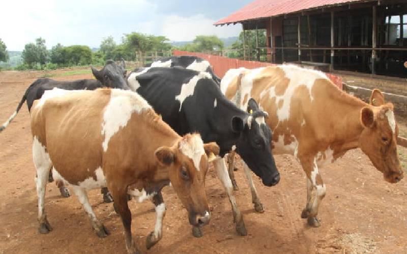 Drugs residue in livestock products high