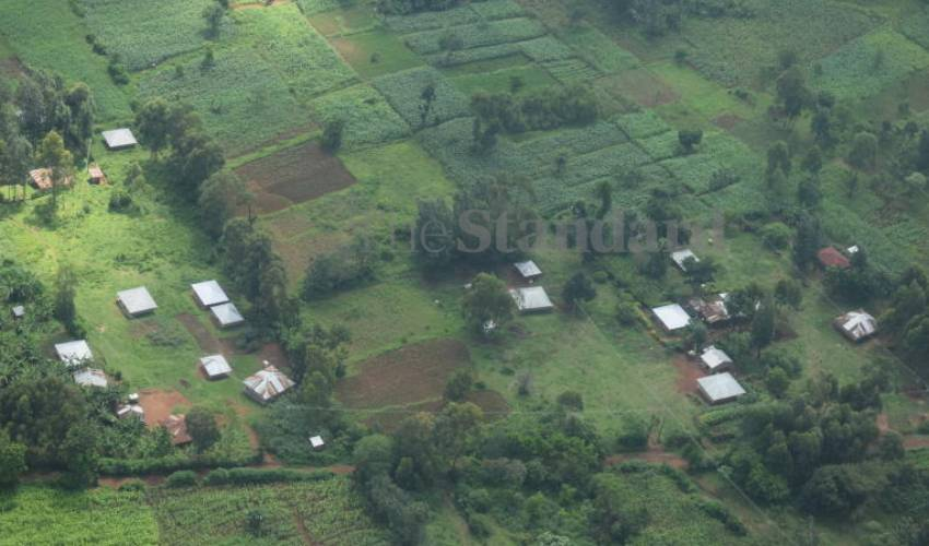 Trees, trees everywhere, but few in Nyanza
