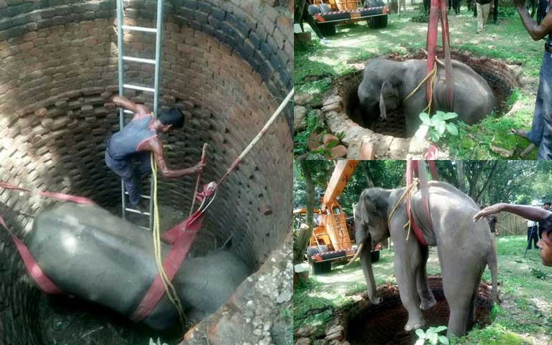 Heart-warming: Elephant rescued after falling into well