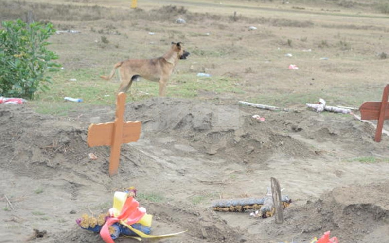 Naivasha: Shock as dogs feast on corpse