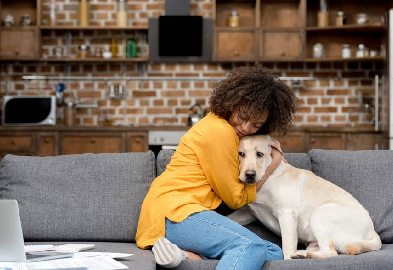 Tips for having a dog in an apartment