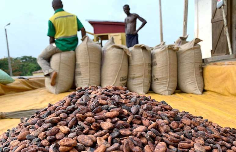 Exploited female cocoa farm workers are paid just Sh29 a day
