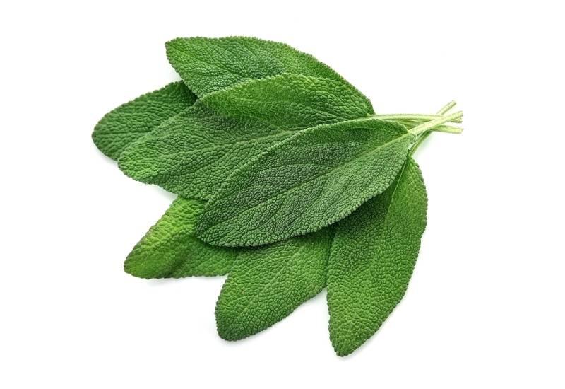 Ingredient of the week: Sage leaves