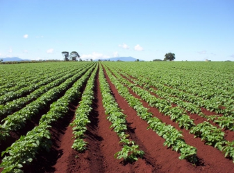 Why farming by remote control doesn't work