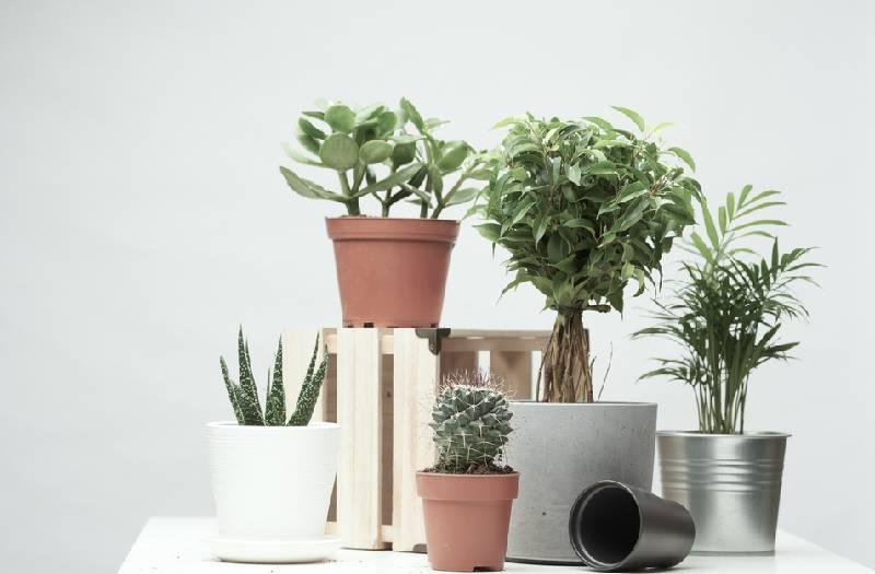 Homestyle: Four rules for healthy houseplants