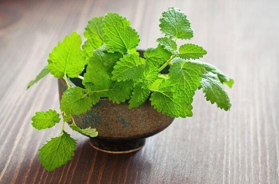Ingredient of the week: Melissa/Lemon balm herb