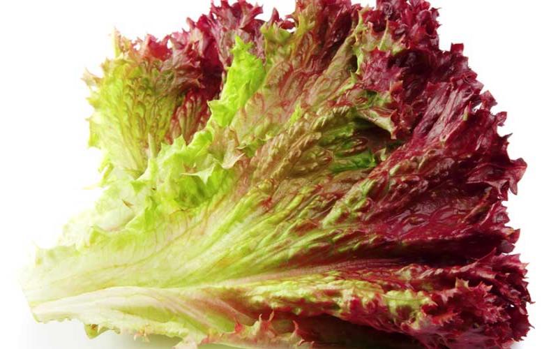 Ingredient of the week: Red leaf lettuce