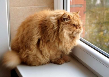 Watch out, your cat could become obese during the cold season