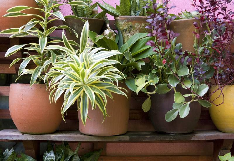 Five things you need if you are a dedicated plant parent