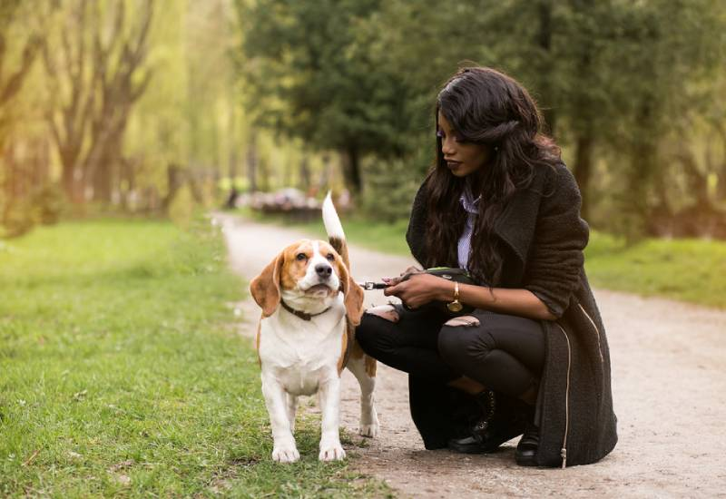 Things you need to consider before adopting a pet