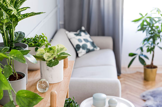 Why your houseplants keep dying and how to fix it