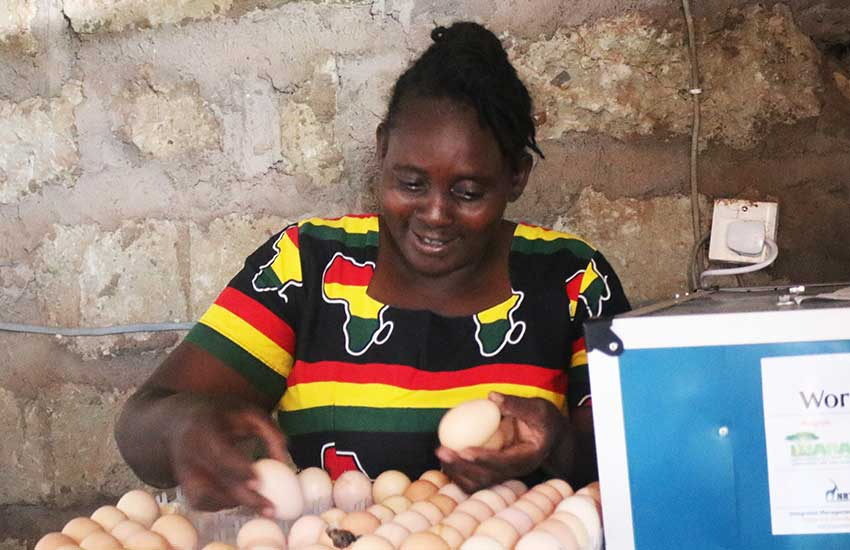Achieving woman: Isiolo's Selina Kathambi inspiring community through poultry keeping
