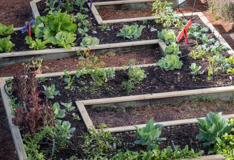 Tips for beginners on how to build a beautiful garden