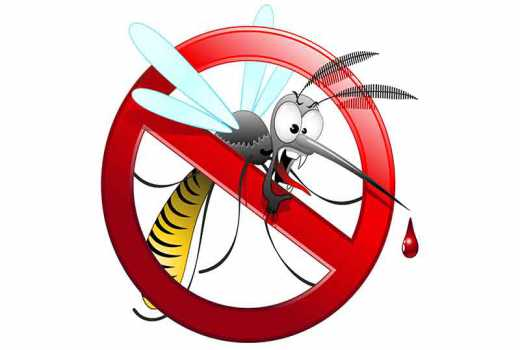 8 ways to ward off mosquitoes from your home