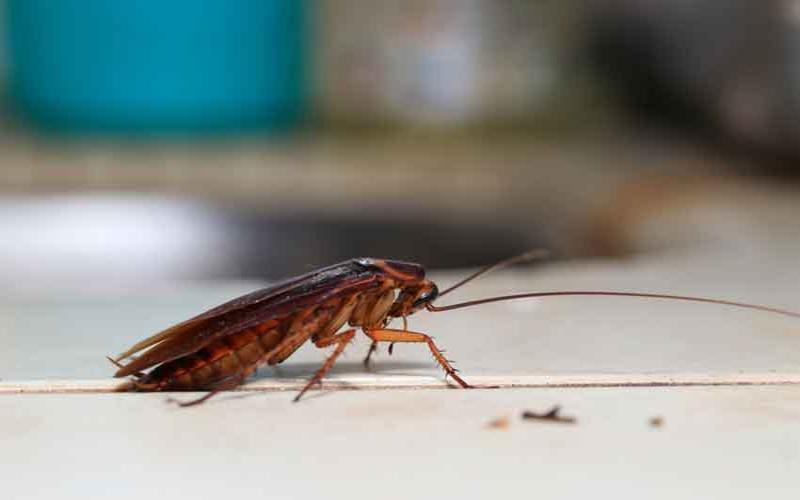 Is your boyfriend a roach?