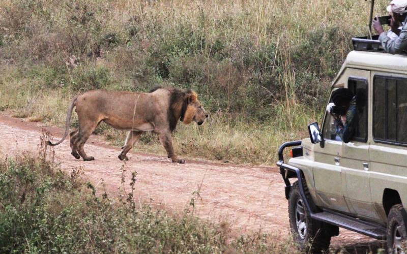 Climate change fueling human wildlife conflict