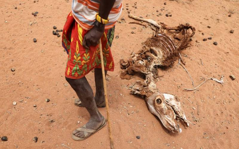 Drought in North Eastern pushes millions towards hunger