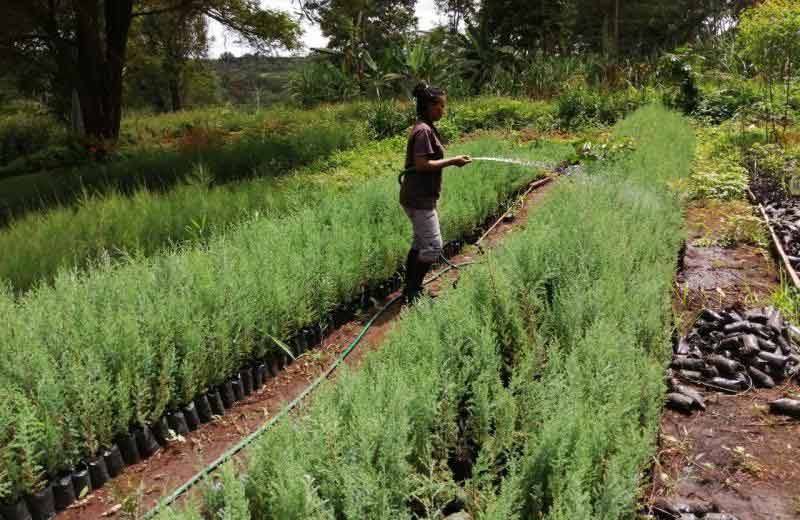 Farming solutions that outsmart climate change
