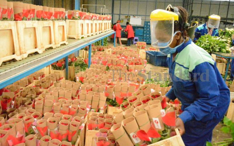 Flower farm workers to benefit from Sh60 million clean energy initiative