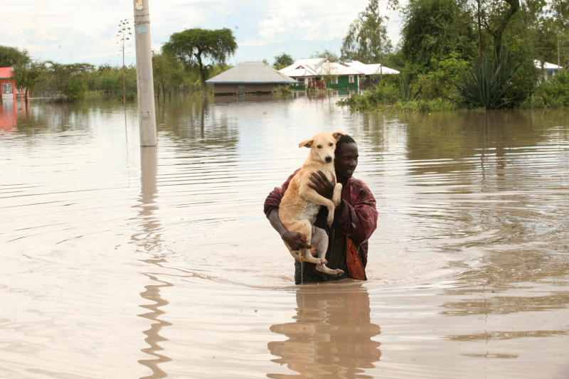 A villager carries his dog to safety at Ayweyo in Ahero following floods in the area (Photo: Denish Ochieng)