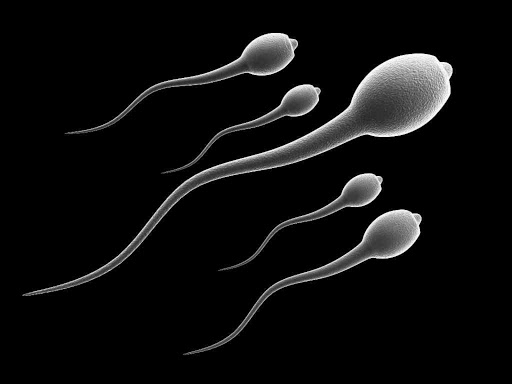 Hard rides could lower your sperm count — Gynaecologist