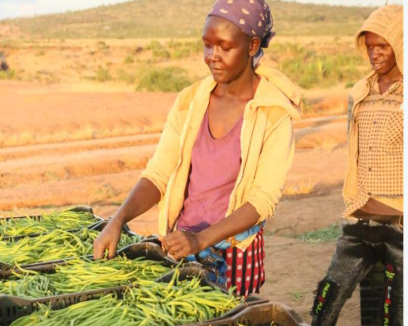 Horticulture tops in forex earnings