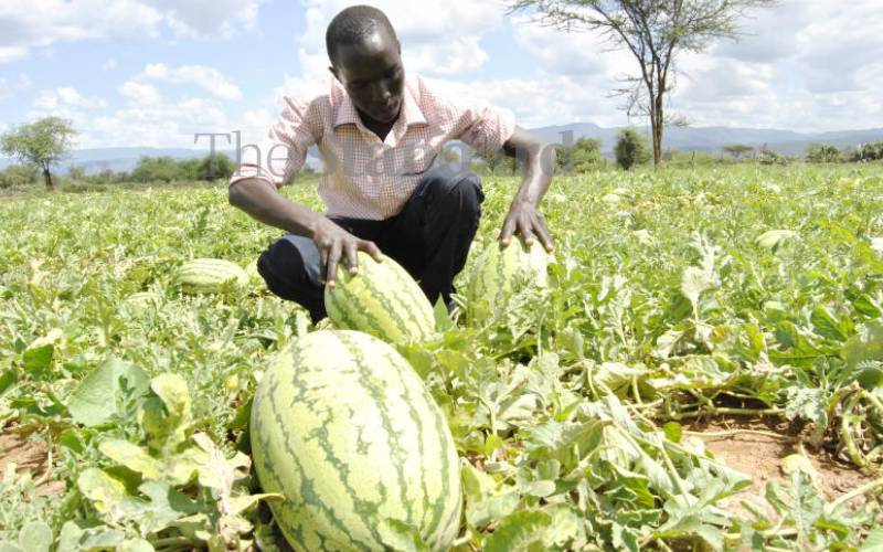 How to make cash from watermelons