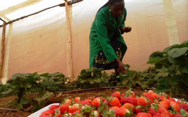 If you do it right, you can reap big from strawberry farming