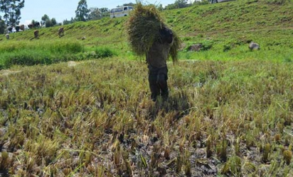 Innovators urged to participate in post harvest losses challenge