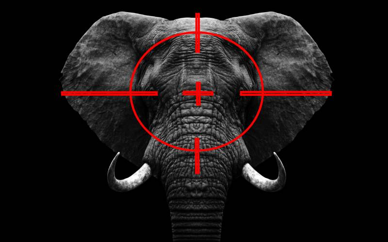 Inside dark, impenetrable world of illicit trade in wildlife trophy