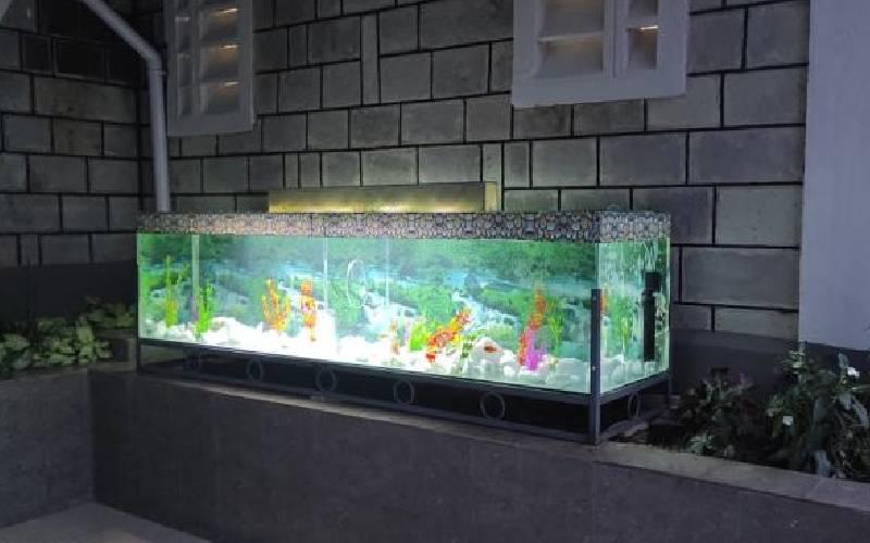 Investors swim in success with aquarium trade