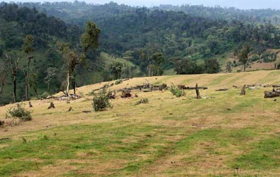 Kenya's forest communities face eviction from ancestral lands