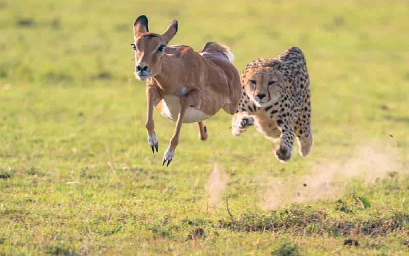 Maasai Mara team launches online photos auction to raise conservation fund