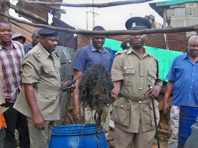 Panties found in illicit brew usually planted- brewers