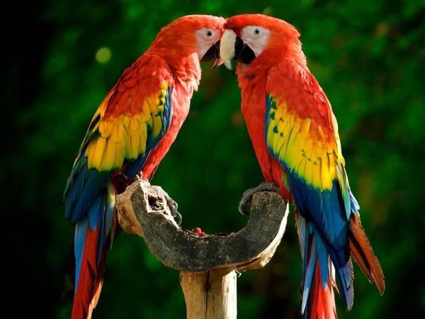 Parrots land Indian businessman in court