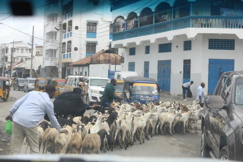 Goats being taken for sale in Mombasa as Muslims celebrate Idd-Ul-Adha. (Photo: Kelvin Karani)
