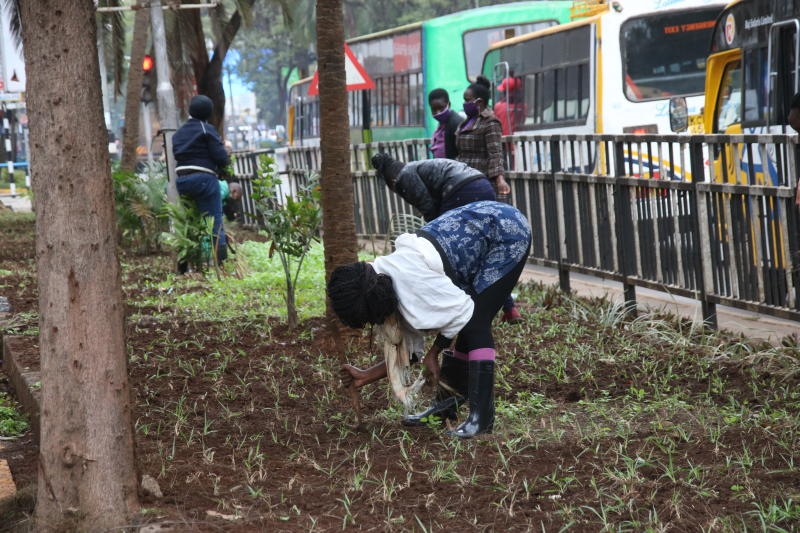 Kazi Mtaani youths rehabilitate Nairobi streets by planting flowers on the sidewalks and pavements (Photo: David Gichuru)