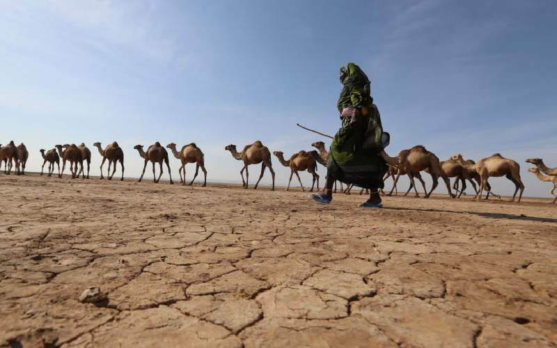 Special report: Kenya reaps big from 59 years of greed and famine of healthy politics
