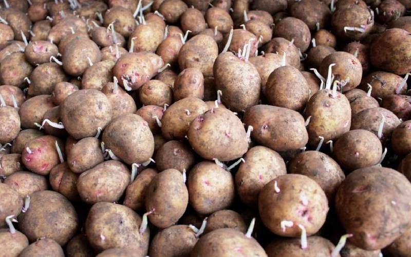State launches Sh100 million potato plant in Meru