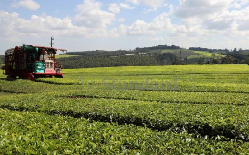 Tea pickers lose case seeking to compel James Finlay to release medical records