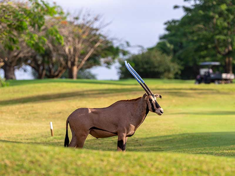 Vipingo Ridge introduces wildlife to golf estate