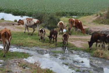 Want healthy herd? Keep them far from swamps