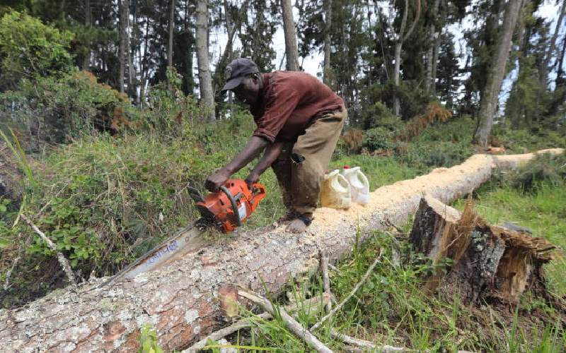 We should not give up on bid to restore Kenya's forest cover