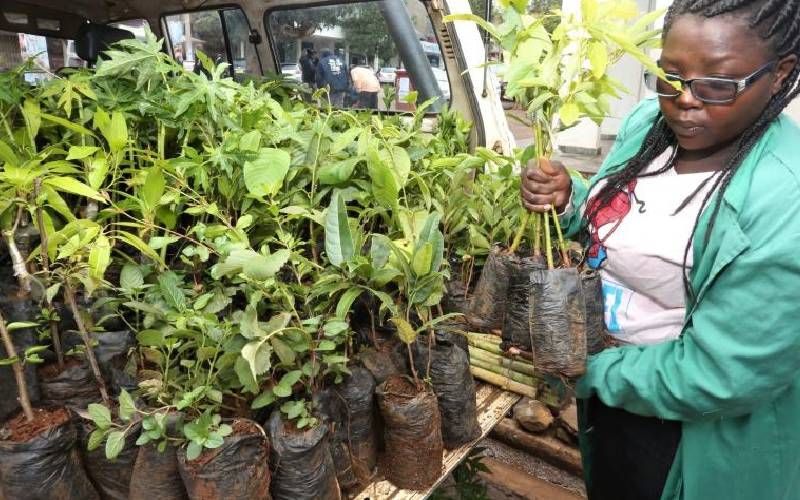 You can make decent cash from seedlings