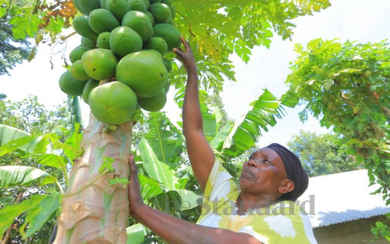 Your guide into pawpaw farming