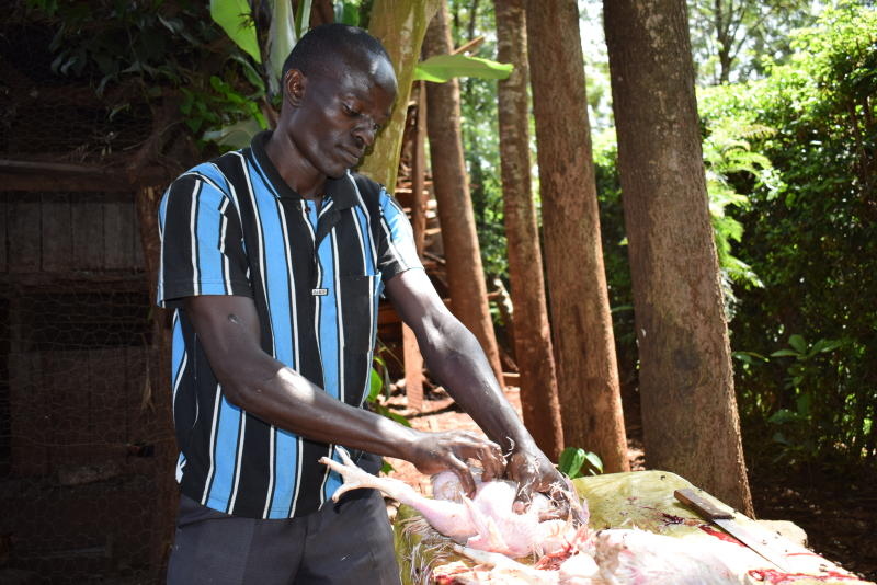 Lazarus Thuku 32, dressing chicken at a poultry farm in Meru on December 25, 2018. The order was meant for a popular local hotel. Thuku who can slaughter a chicken in less than three minutes earns an average of Sh15,000 a week. [Olivia Murithi, Standard]